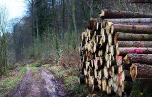 Holzlager1
